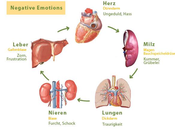 Die fünf organe und ihre gefühle